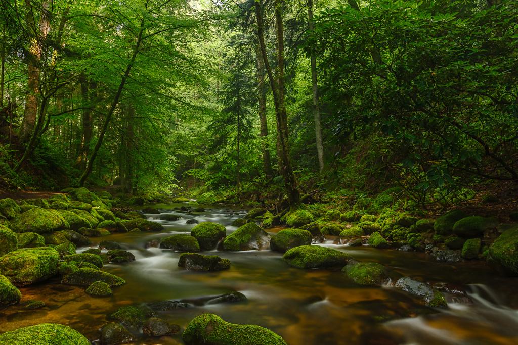Mossy Flow